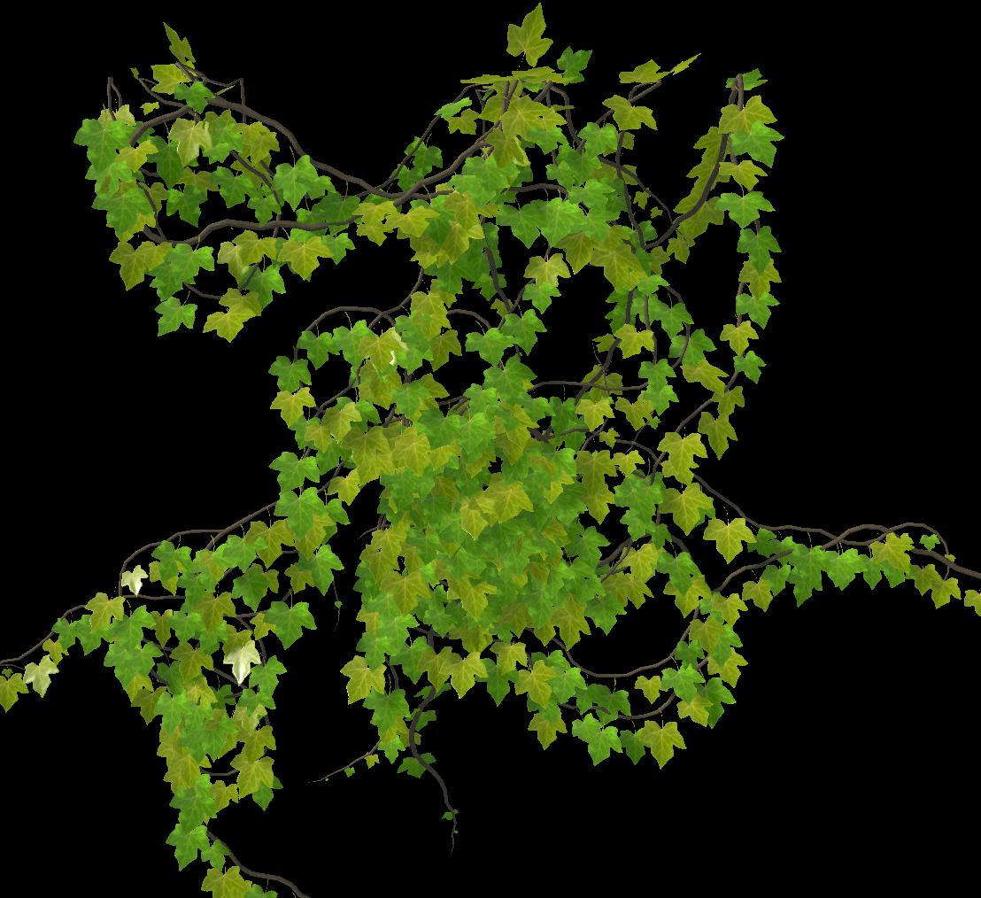 http://deenvironment.com/wp-content/uploads/2021/06/BUG_REPORT-Baking-Ivy-Wind.png